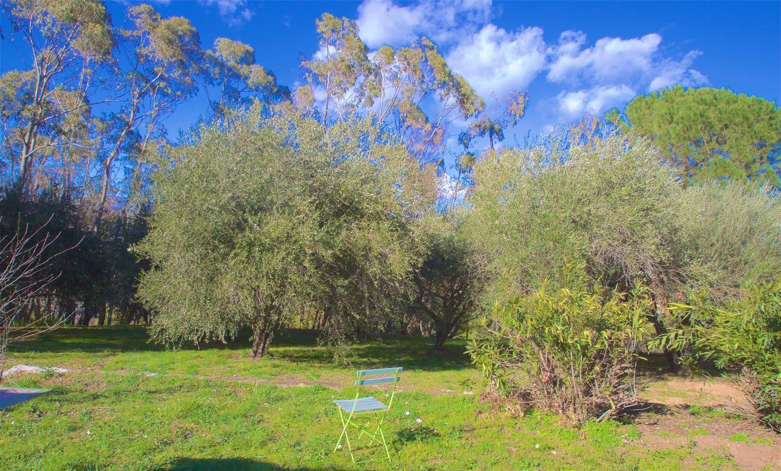 L'oliveraie coté chambres